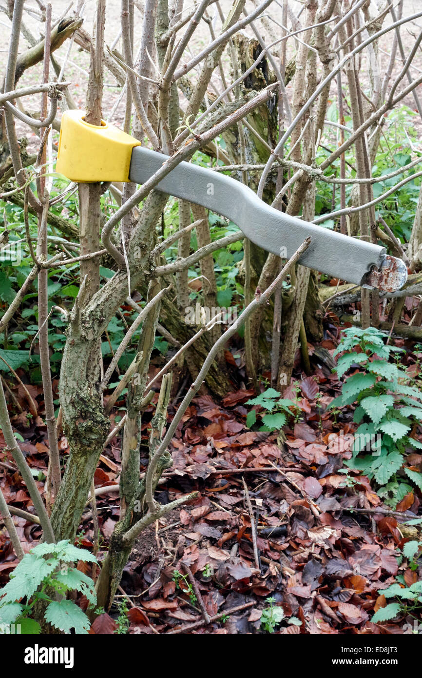 Unusual sight car steering wheel lock clamping a tree branch - Stock Image