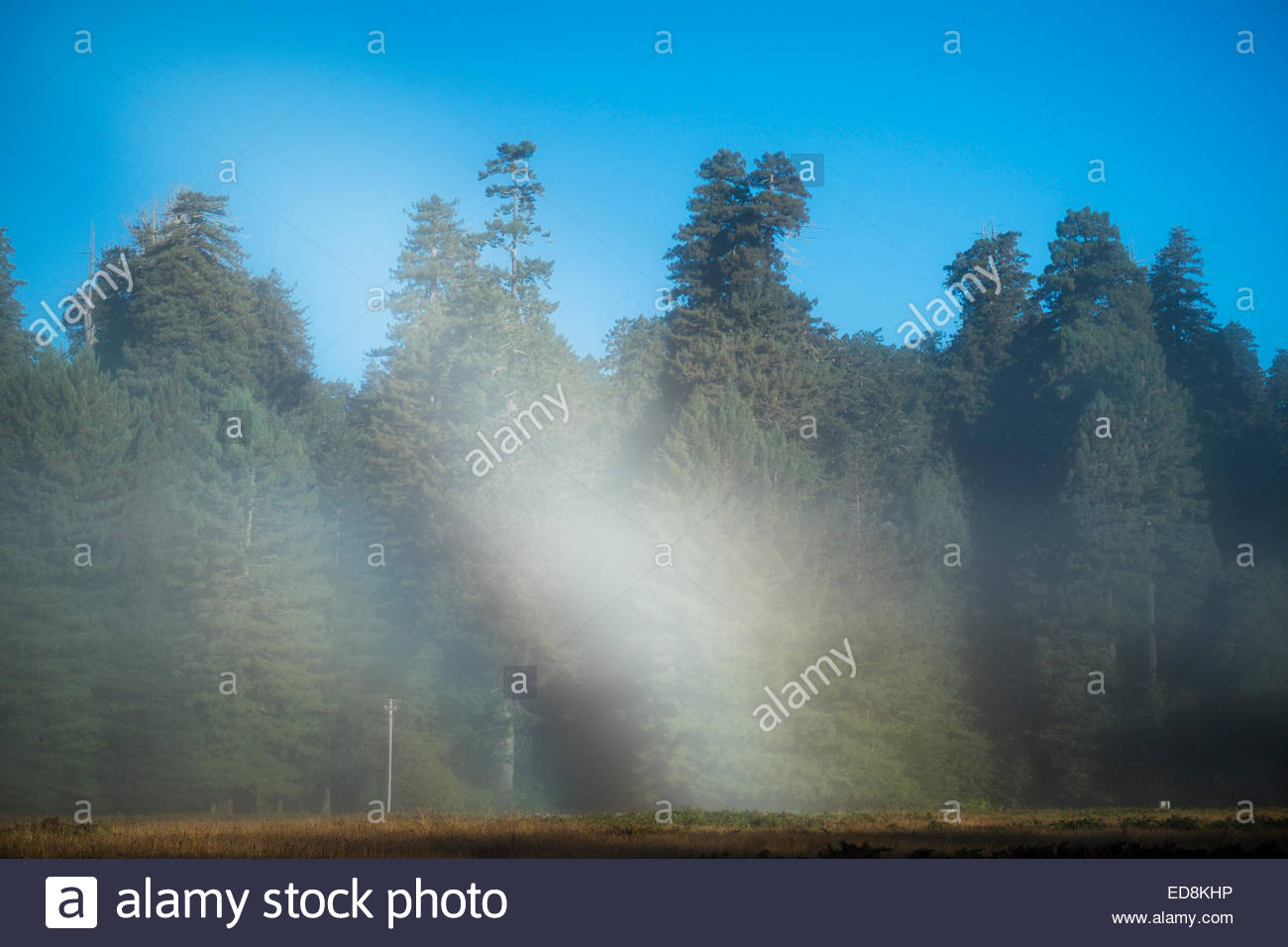 Fogbow, Prairie Creek Redwoods State Park, California - Stock Image