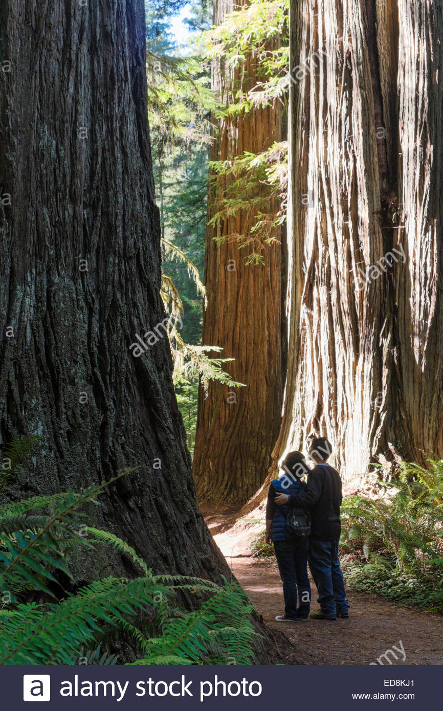 Married Couple Looking at Old-Growth Redwood Trees on Simpson-Reed Trail, Jedediah Smith Redwoods State Park, California - Stock Image
