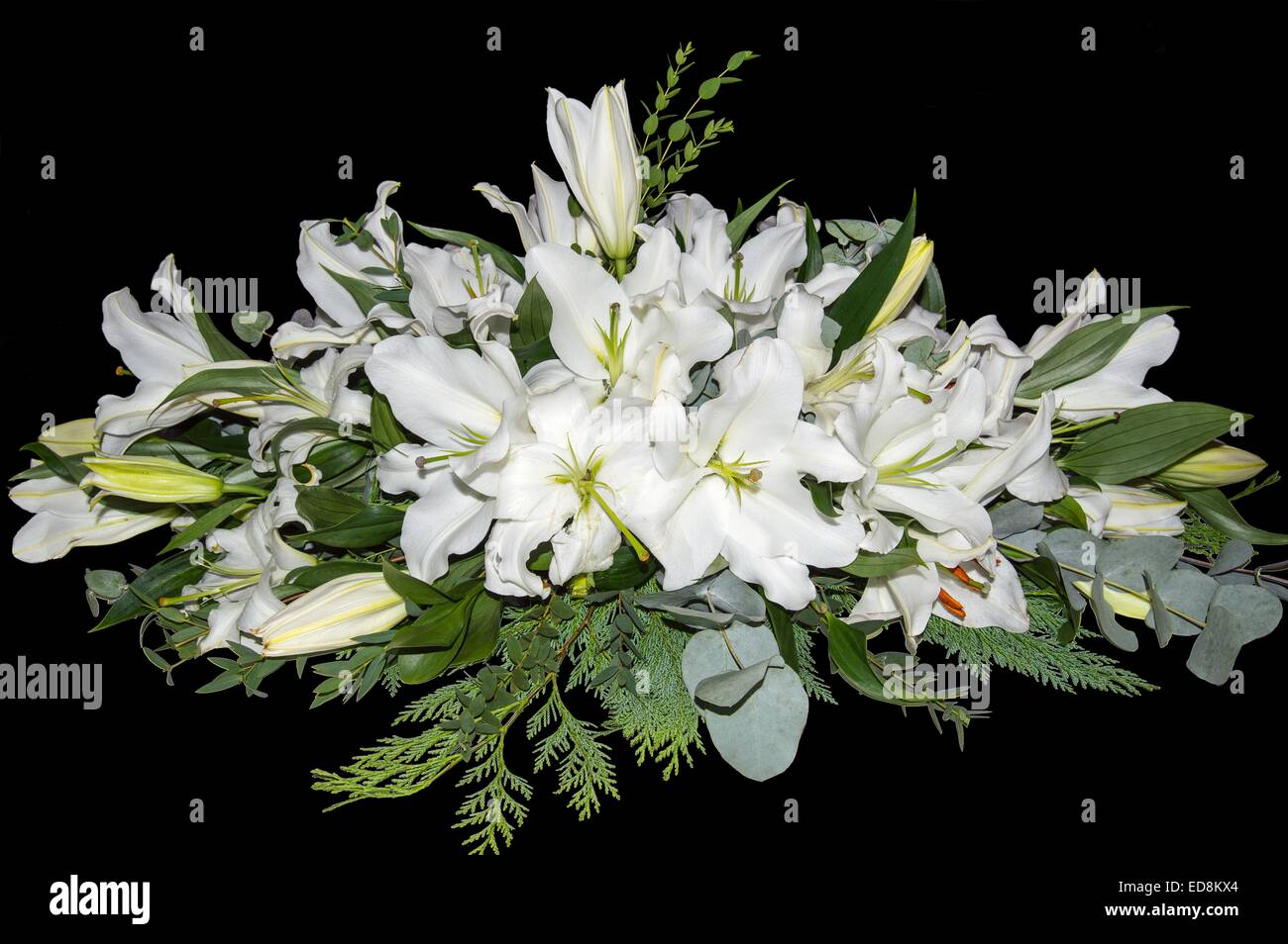 Black lilies stock photos black lilies stock images alamy a spray of white lilies isolated on a black background stock image izmirmasajfo
