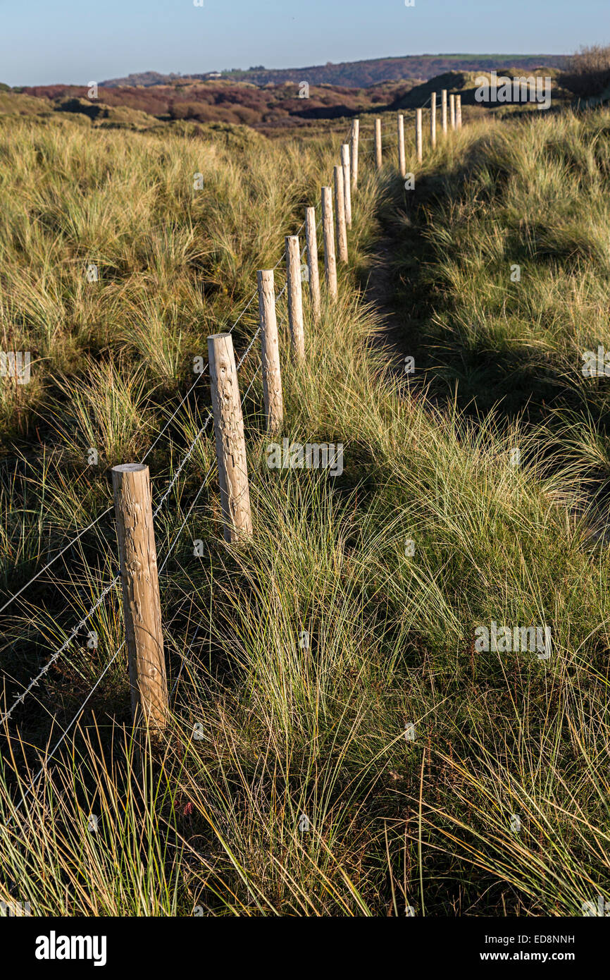 Fence to restrict cattle grazing on fixed dune habitat with marram grass, Merthyr Mawr, Wales, UK - Stock Image