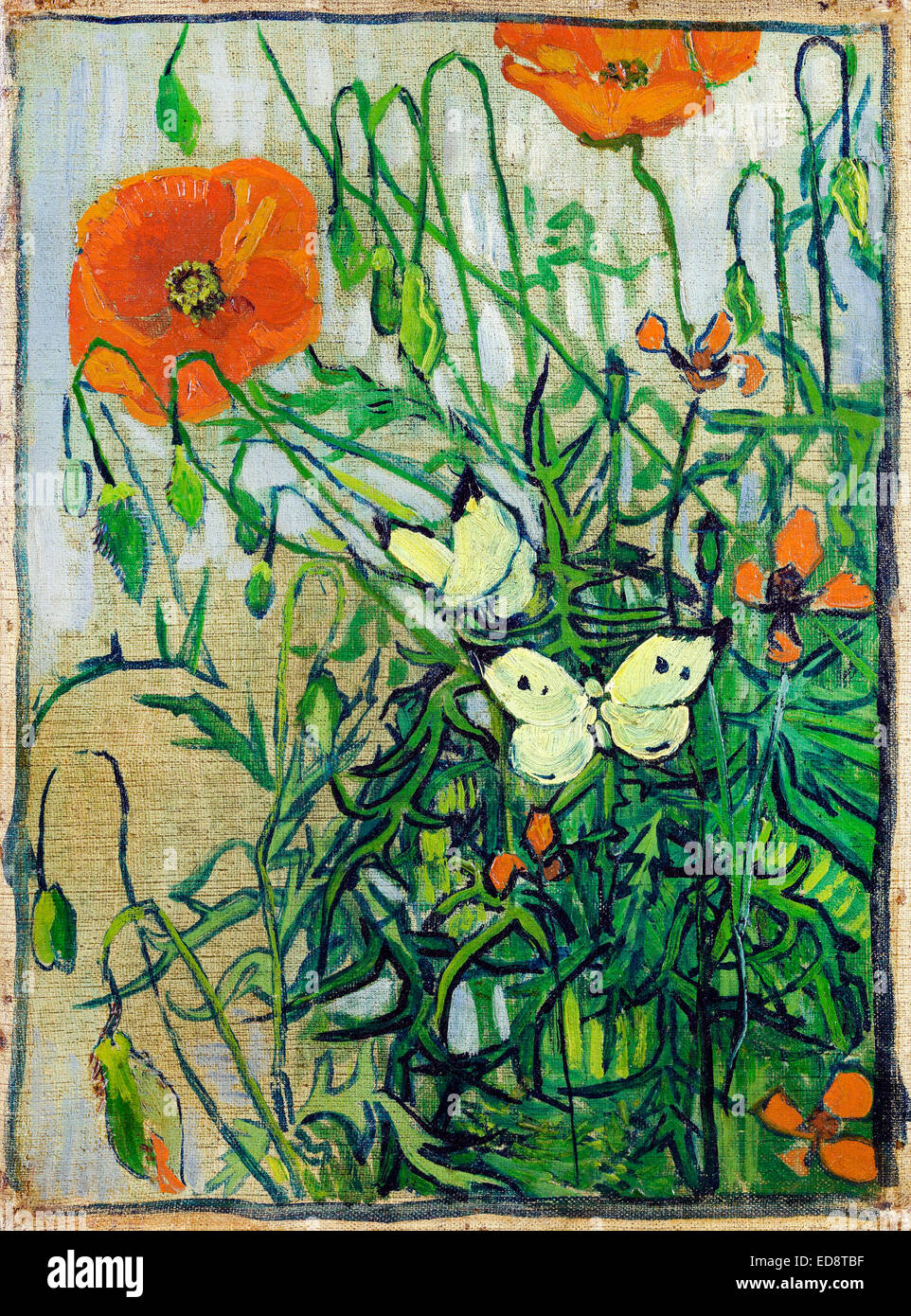 Vincent Van Gogh Poppies And Butterflies 1890 Post Impressionism