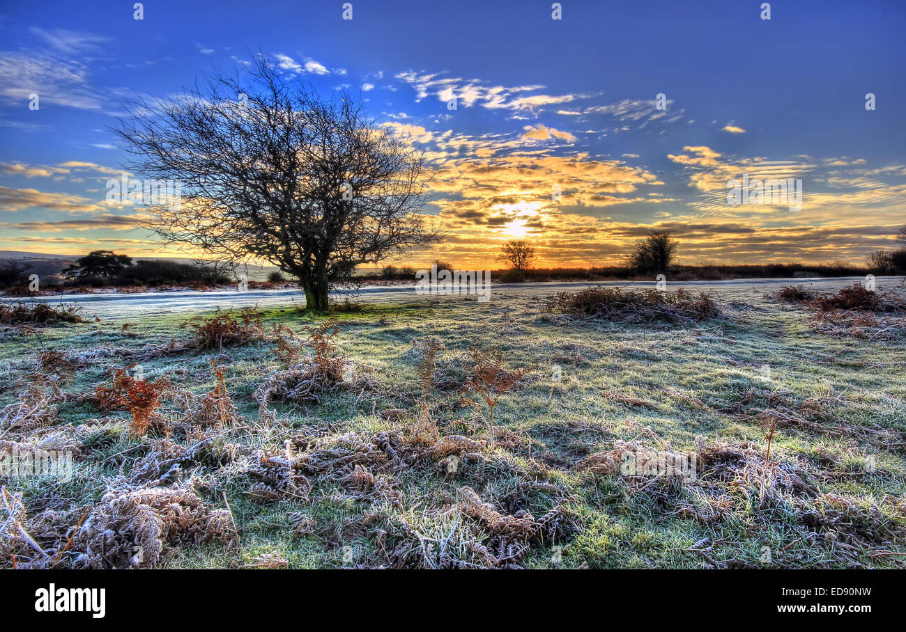 Cold frosty morning over Dartmoor National Park near Plymouth showing the sun rise behind a bare tree - Stock Image