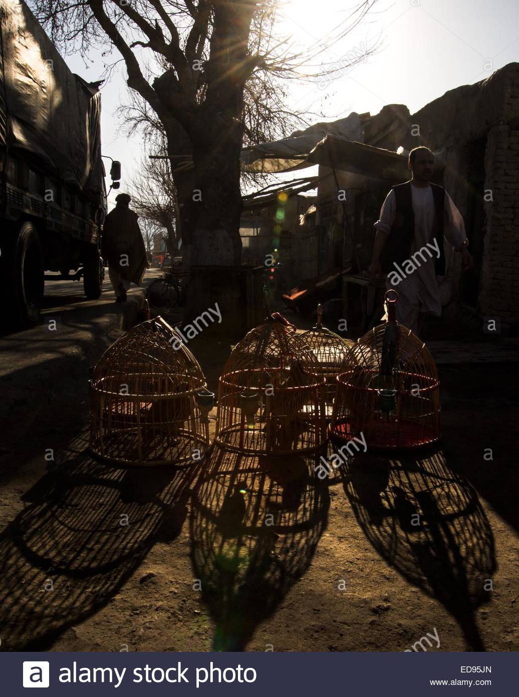 Partridges in cages for sale on the streets of Northern Afghanistan. The birds are popular for use in fighting for - Stock Image