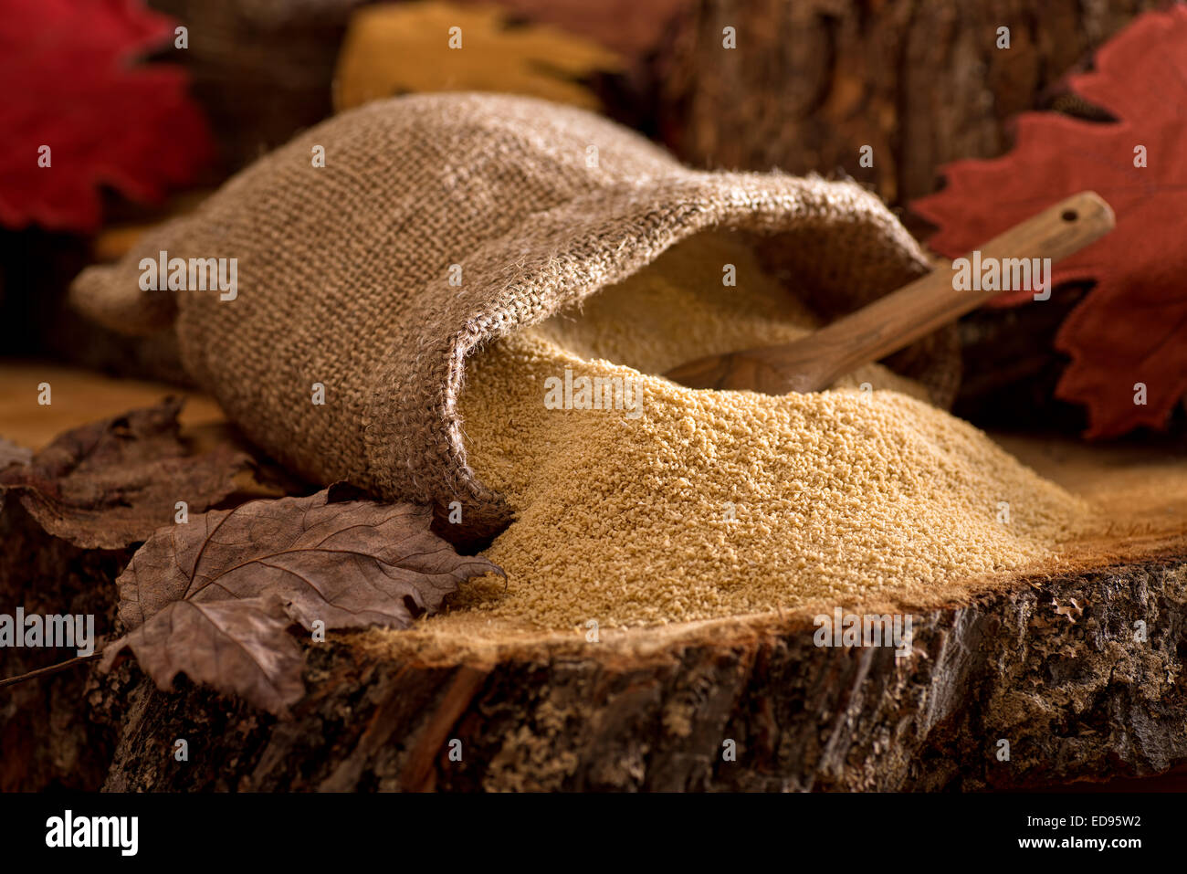 A burlap bag of delicious natural maple sugar in a maple forest setting. - Stock Image
