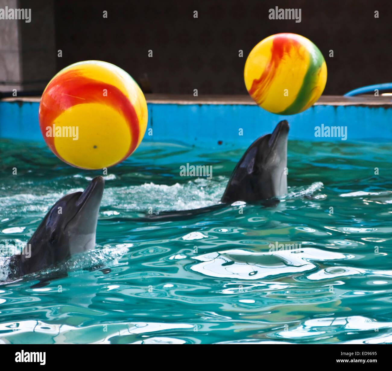 Two delphins with yellow balls. - Stock Image