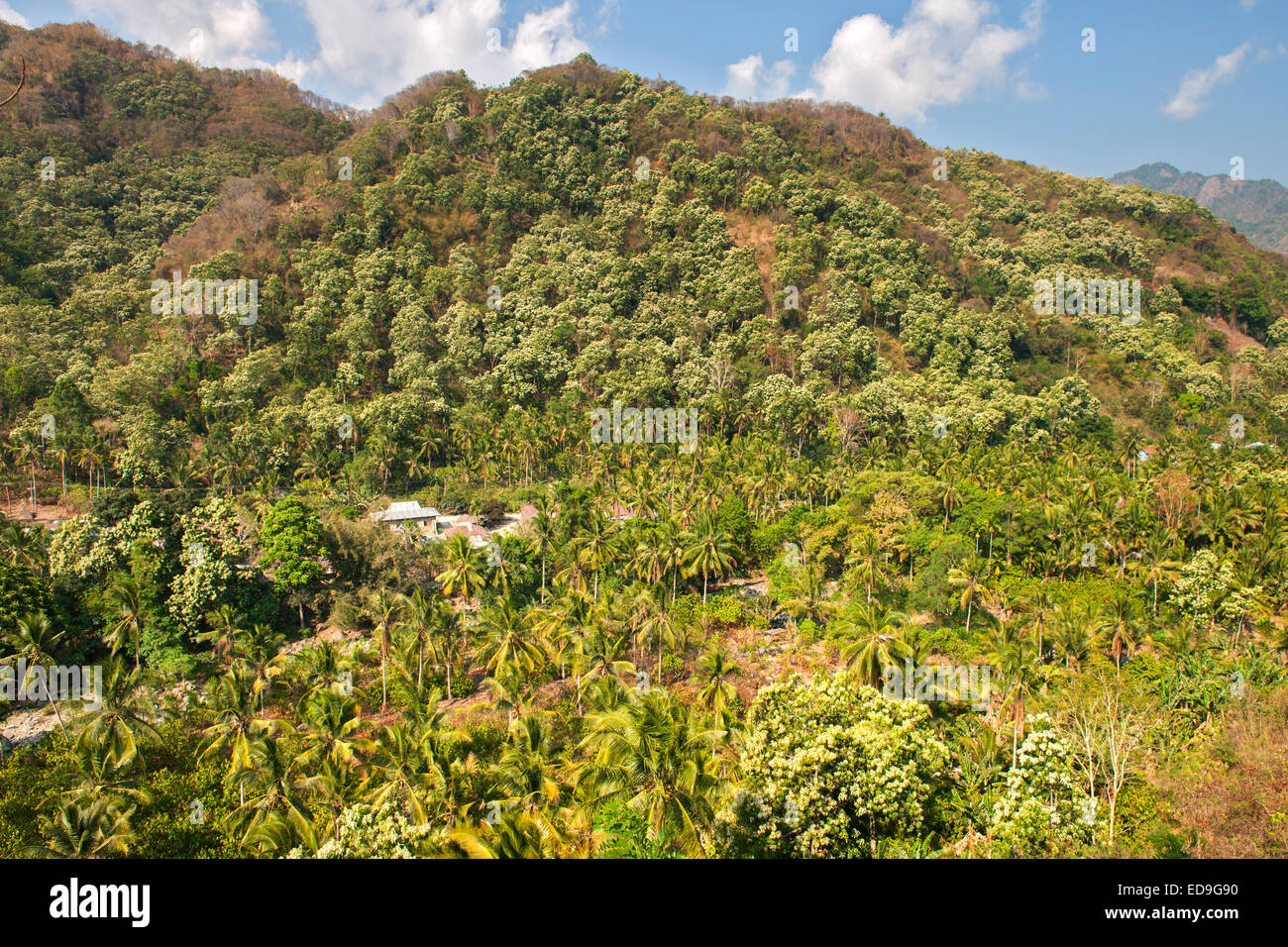 Landscape scenery between the towns of Maumere and Moni on Flores island, Indonesia. Stock Photo