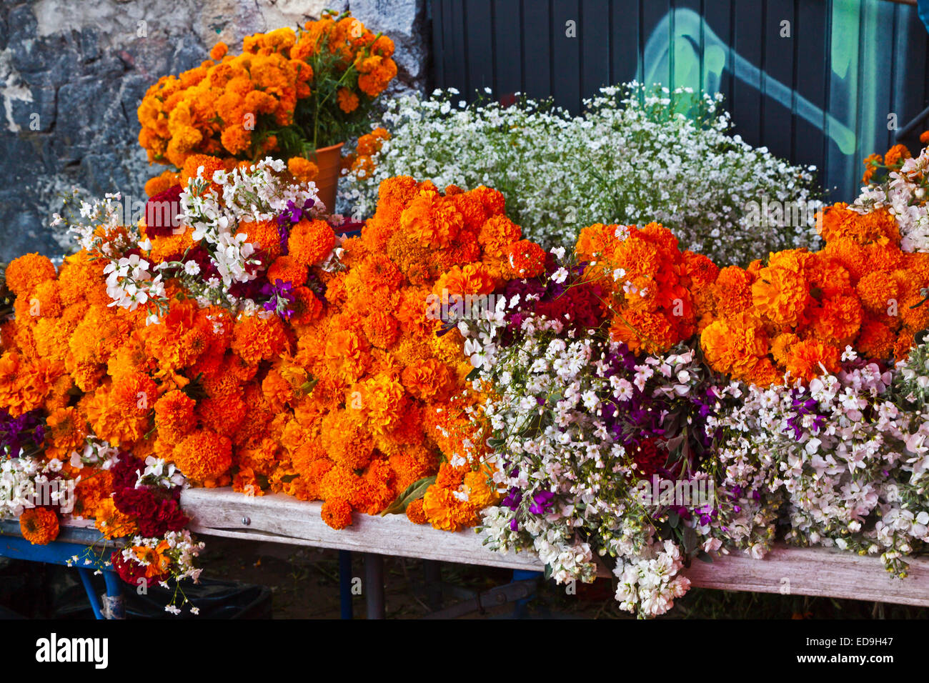 FLOWERS for sale during DAY OF THE DEAD -  SAN MIGUEL DE ALLENDE, MEXICO - Stock Image