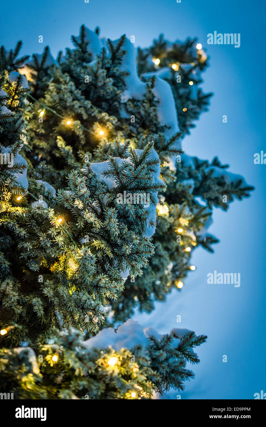 Festively decorated Christmas fir tree outside in the snow. Snow covered branches, warm lights, cold background. - Stock Image