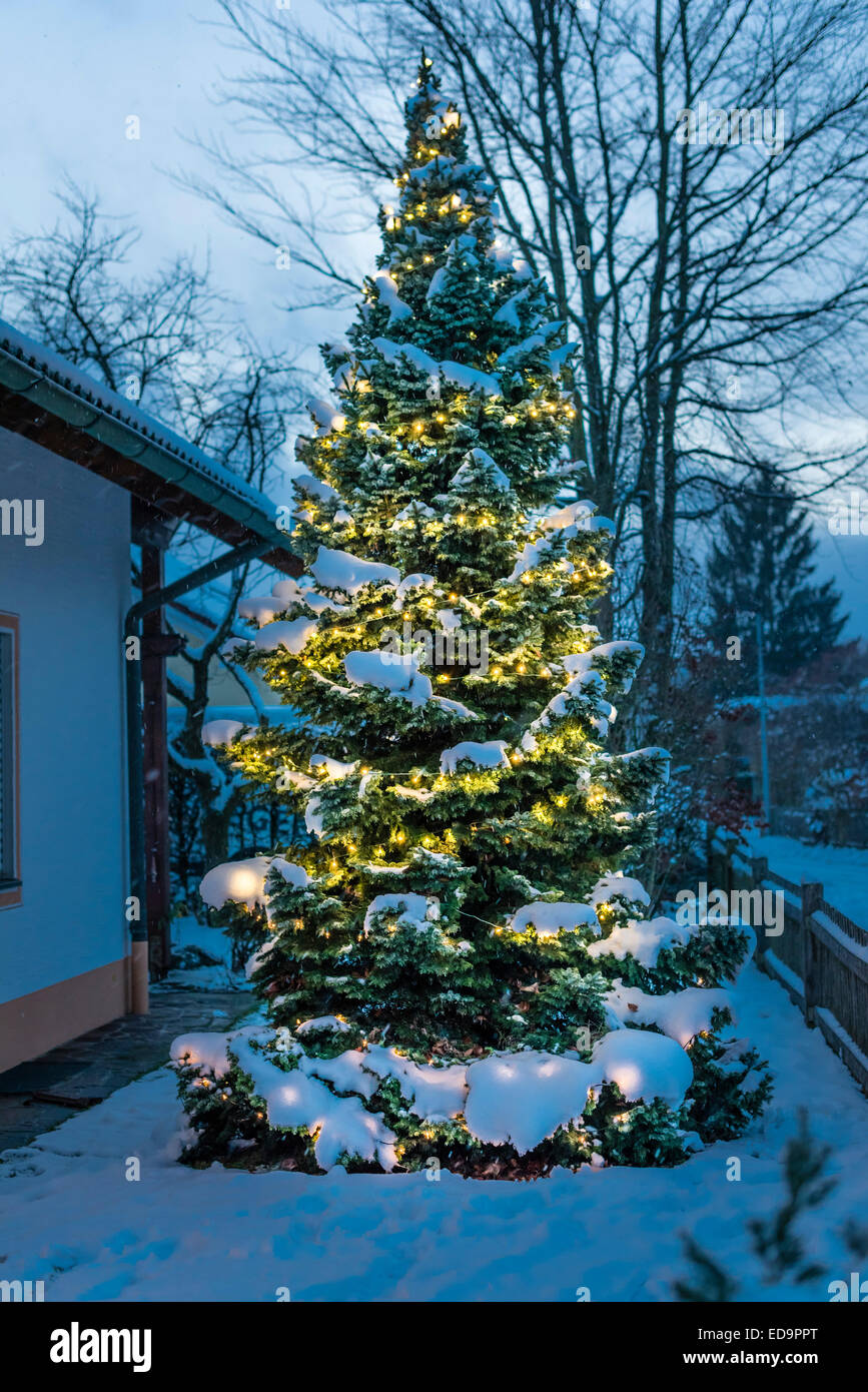 festively decorated christmas fir tree outside in the snow snow covered branches warm lights