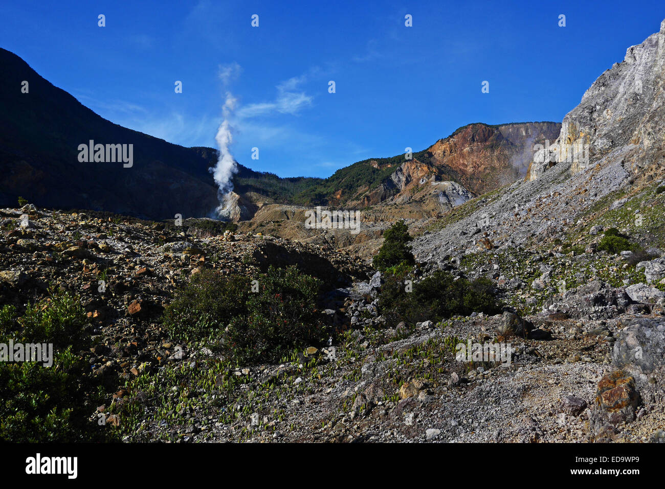 Mount Papandayan's crater. - Stock Image