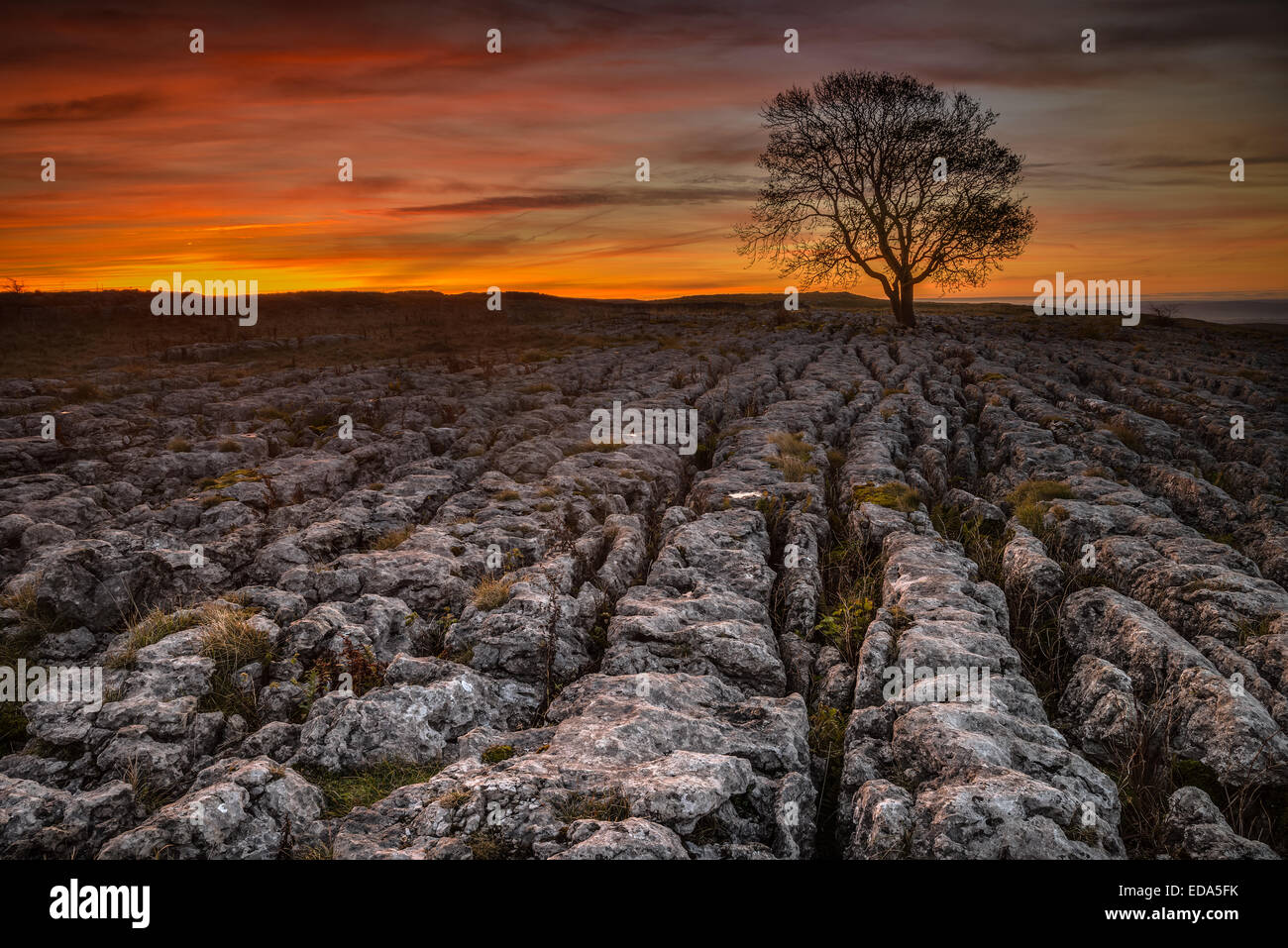 Sunrise behind the famous lone tree at Malham in the yorkshire dales - Stock Image