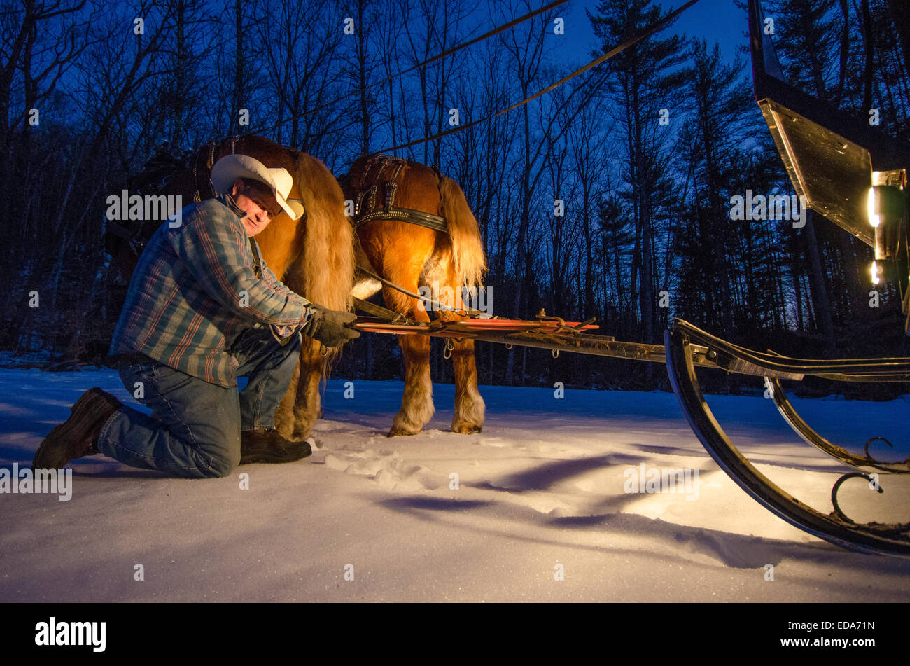 A cowboy prepares a horse drawn sleigh ride in the forests of New Hampshire. - Stock Image