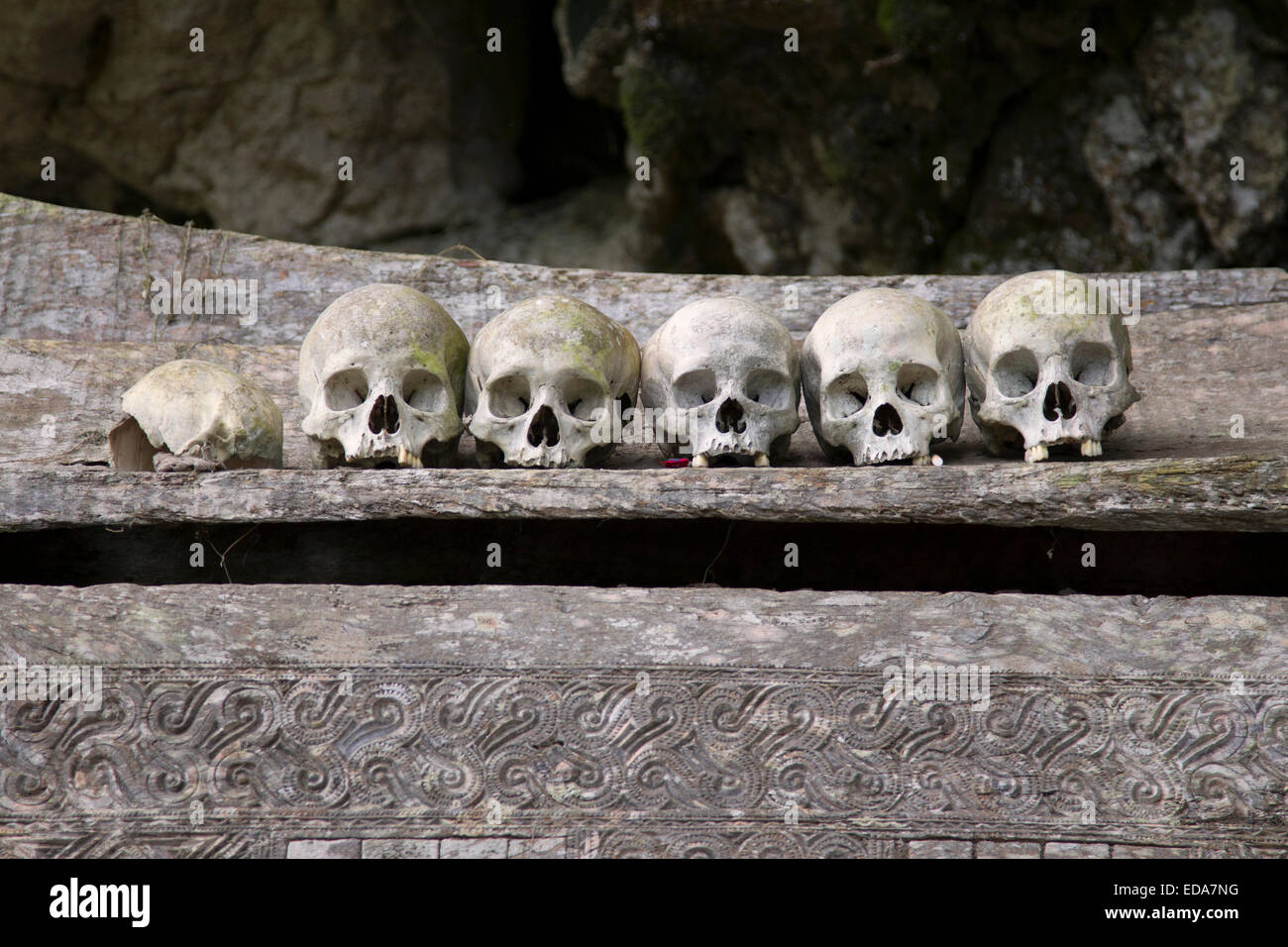 Skulls at Ke'te Kesu - Stock Image