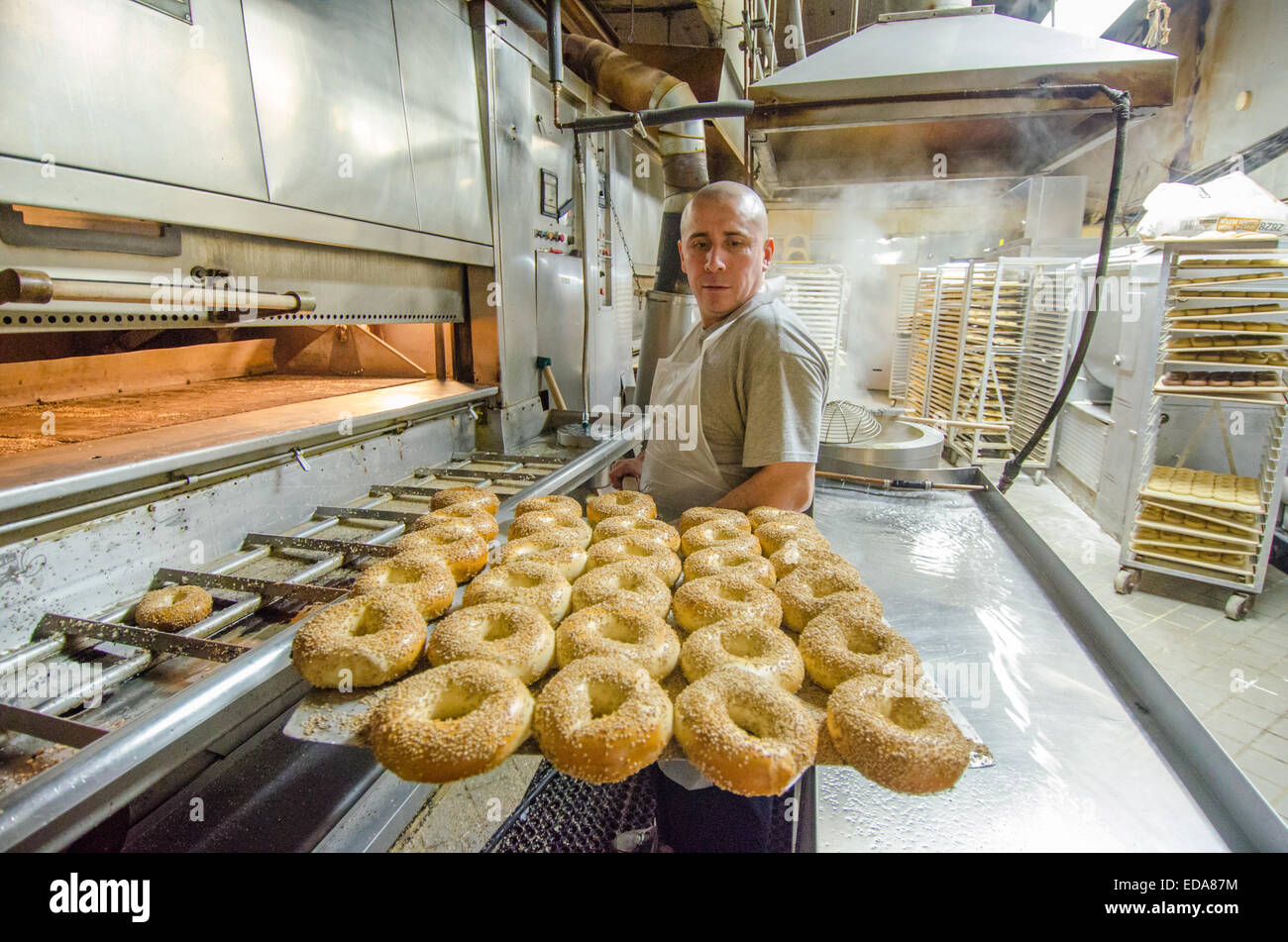 A fresh batch of hot New York City style sesame bagels are removed from the oven at the famous Manhattan H&H - Stock Image