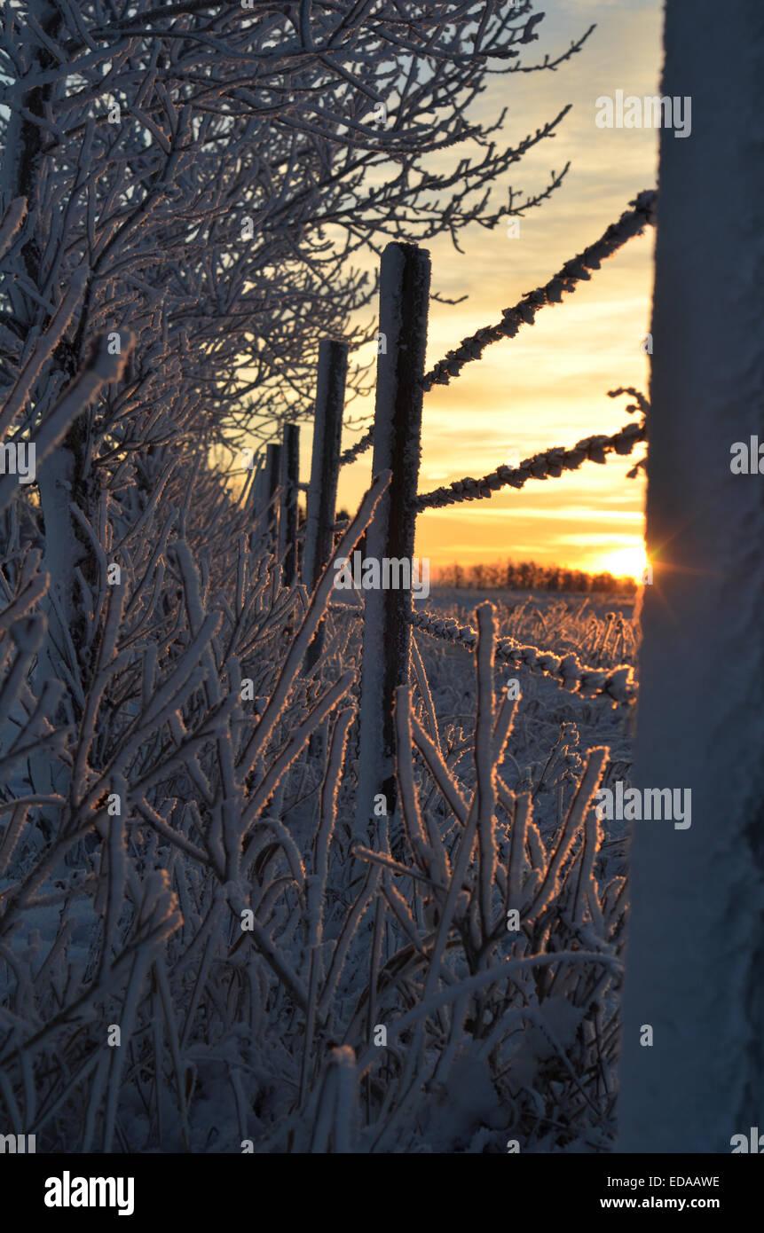Frosty sunrise - Stock Image