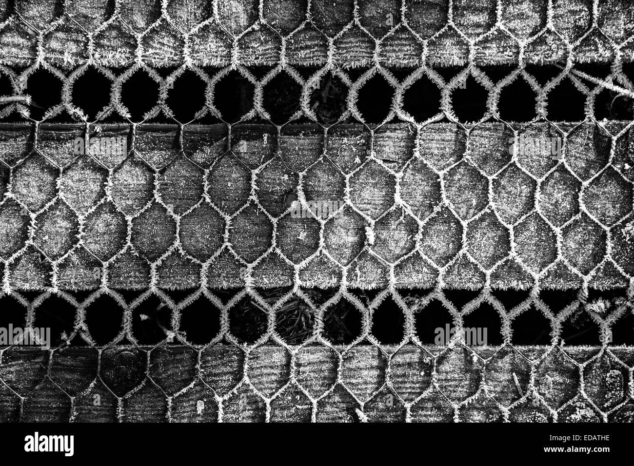 Chicken Wire Stock Photos & Chicken Wire Stock Images - Alamy