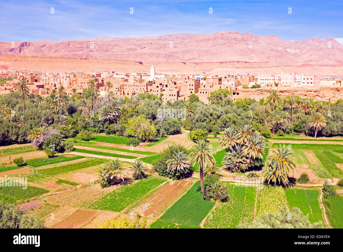 Oasis in the dade valley in Morocco Africa - Stock Image