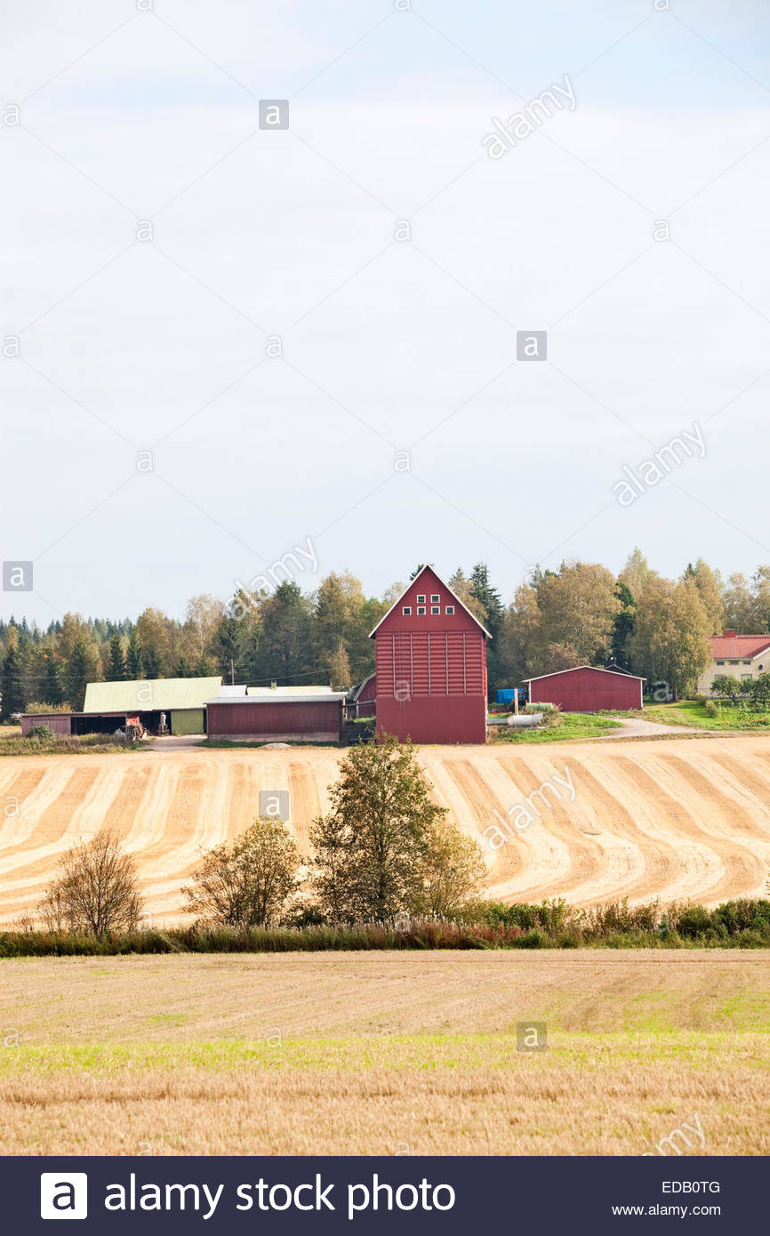 Autumn fields in Finland - Stock Image