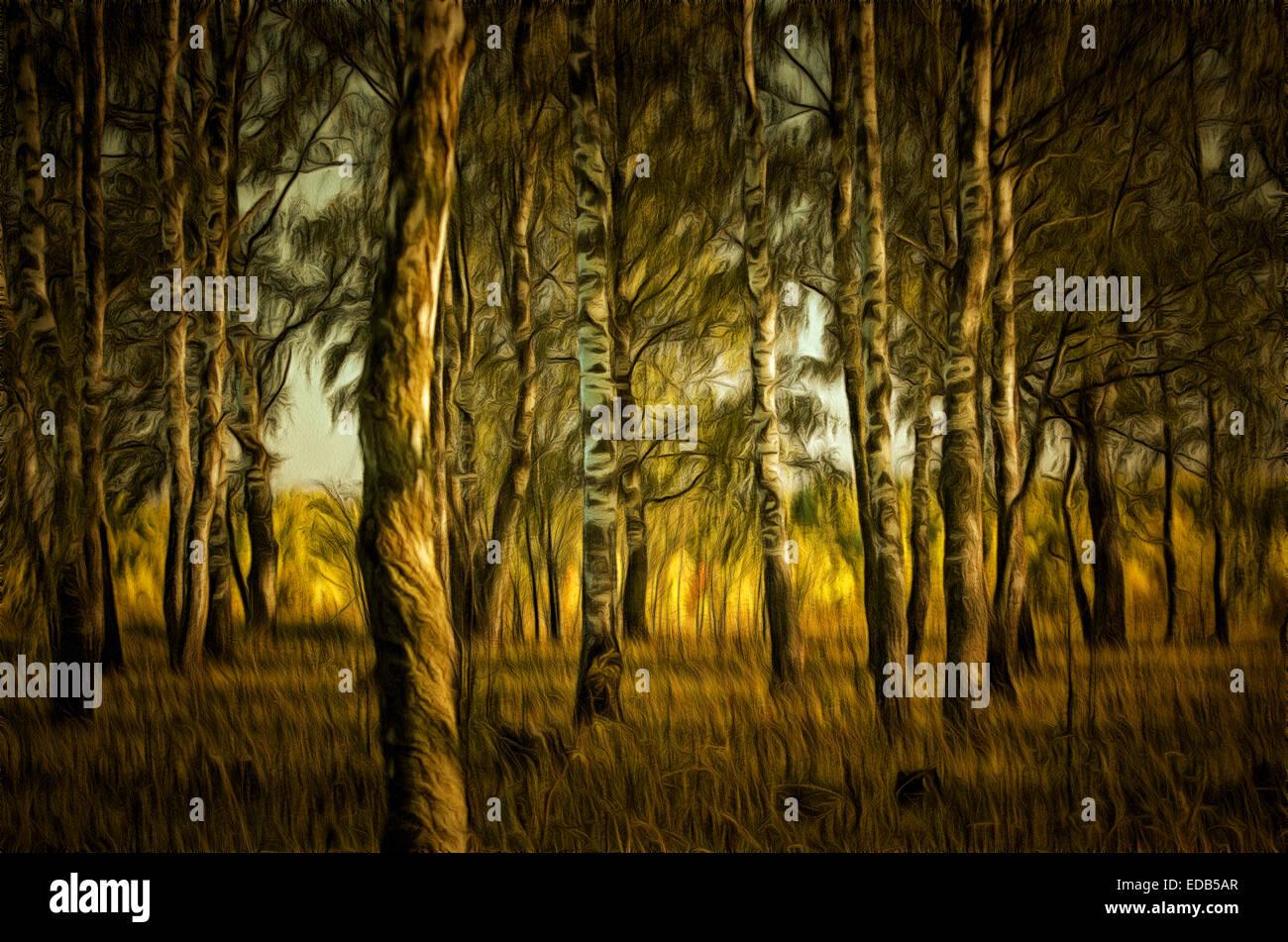 Birch (Lat. Bétula) - genus of deciduous trees and shrubs birch family (Betulaceae), birch grove - Stock Image