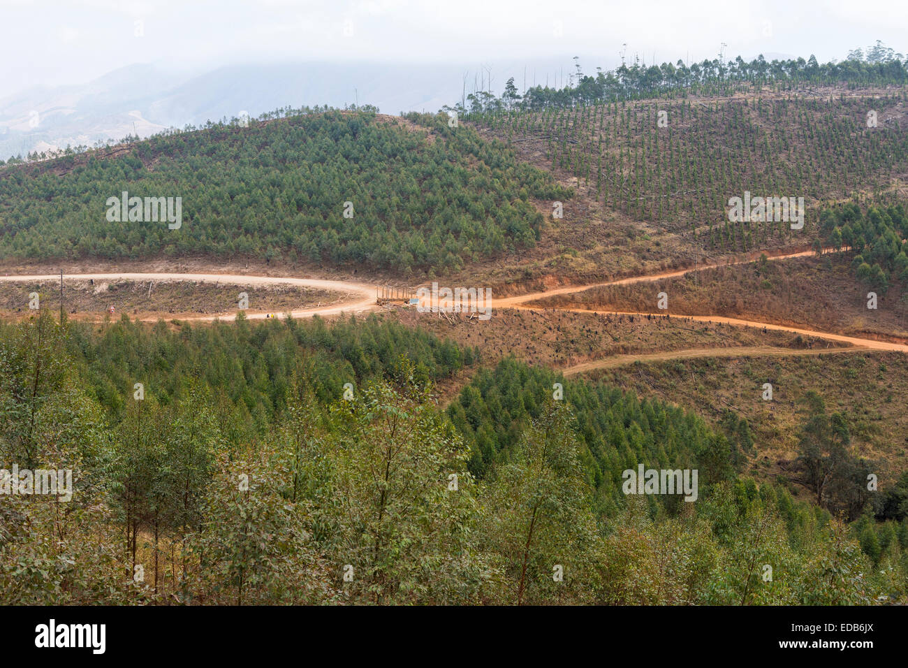 SWAZILAND, AFRICA - Roads through timber industry in Hhohho District - Stock Image