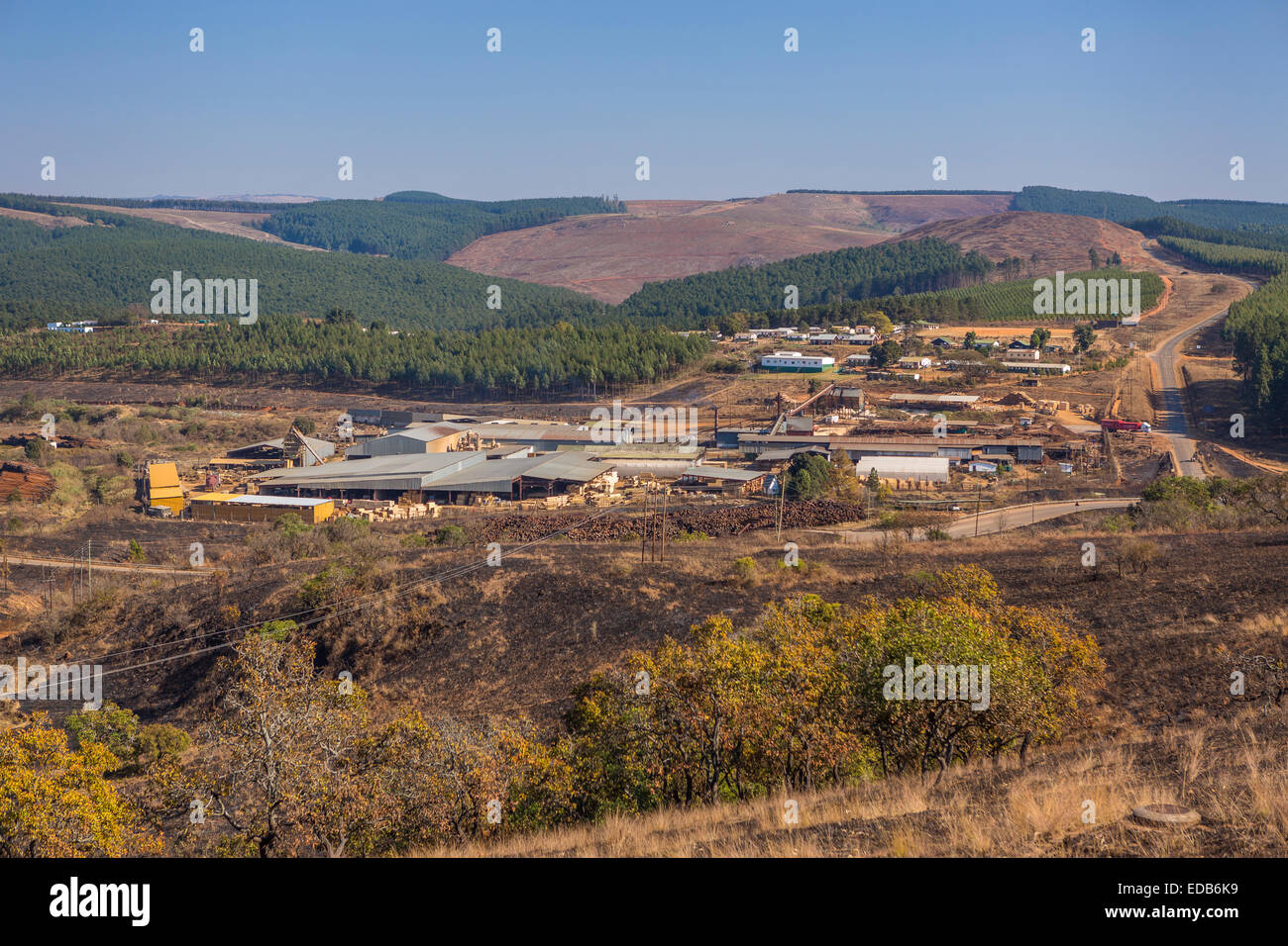 HHOHHO, SWAZILAND, AFRICA - Sawmill and tree plantation clear cutting Stock Photo