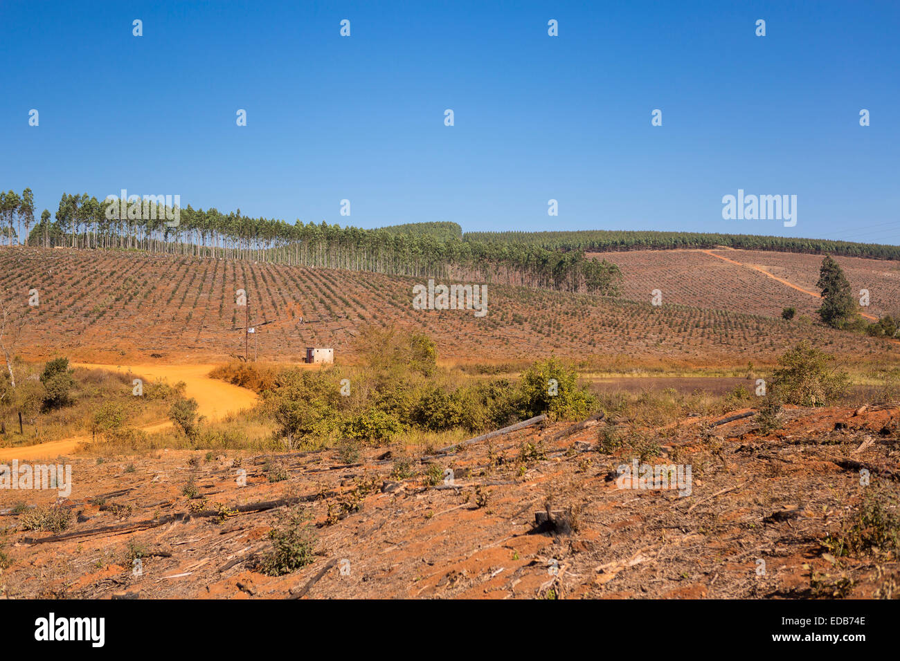 HHOHHO, SWAZILAND, AFRICA - Timber industry landscape, trees and clearcut. Stock Photo