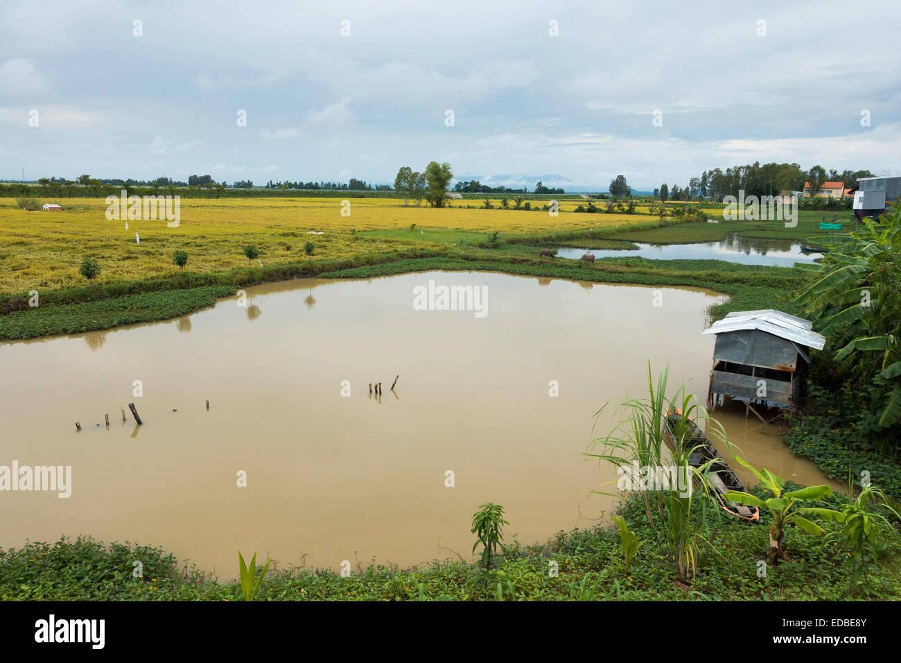 Rice paddies, Chao Doc, Vietnam - Stock Image