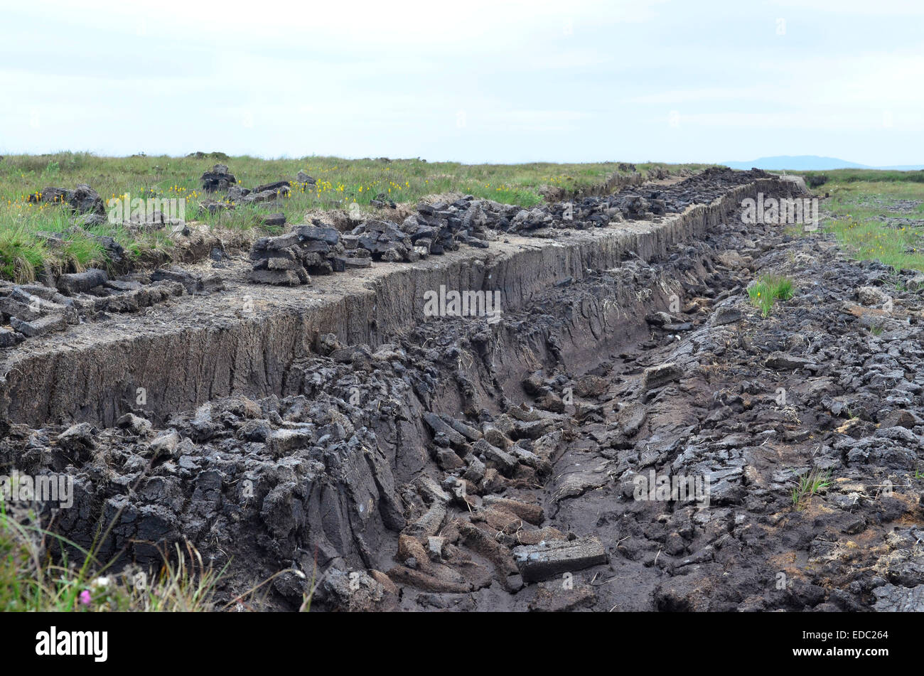 A field of peat that is used in the process of making Laphroaig Whisky, Islay, Scotland - Stock Image