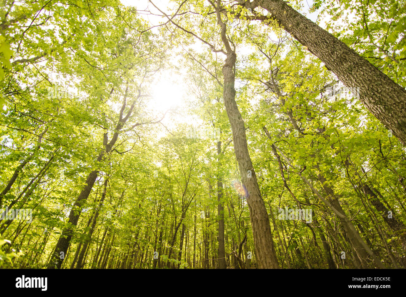 Forest in the Appalachian Trail - Stock Image
