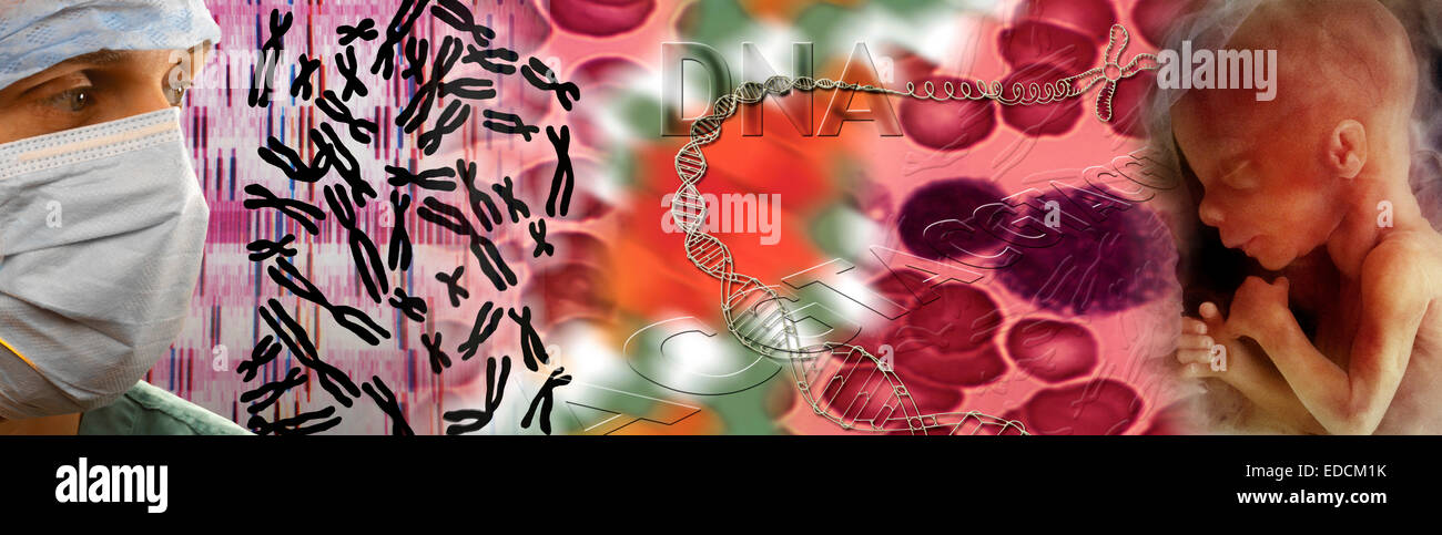 Genetics - DNA, DNA Mapping, Chromosomes, and a Human Fetus - Stock Image