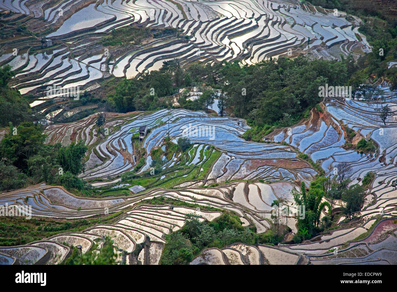 Terraced rice paddies on hillside near Xinjie in the Yuangyang district, Yunnan province, China - Stock Image