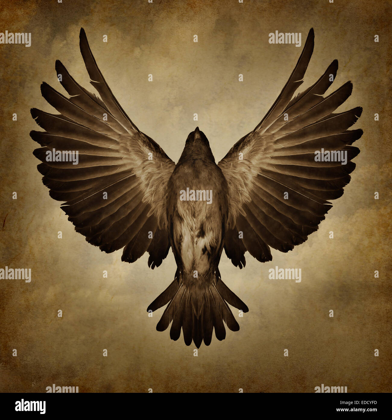 Wings of freedom on a grunge texture background as a breaking free and spirituality faith symbol as a bird with - Stock Image