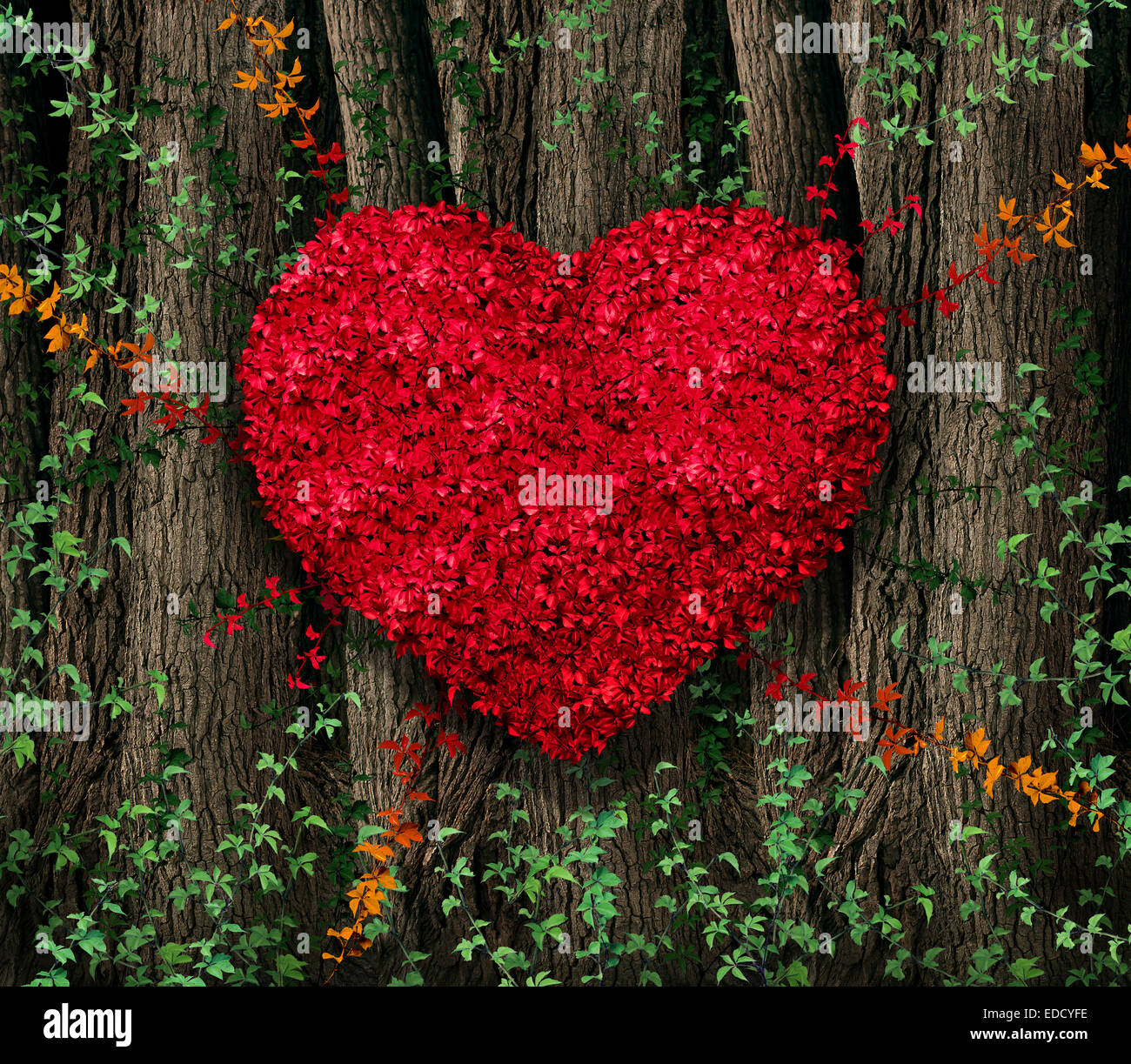 Valentines day red leaf vine growing in a natural forest of big trees shaped in a heart shape as a happy celebration - Stock Image