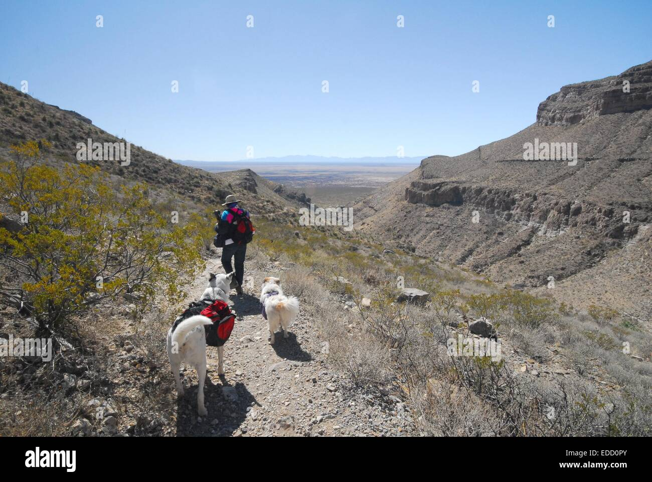 Hiking a  trail in Oliver Lee State Park, New Mexico with my sister and dogs. - Stock Image