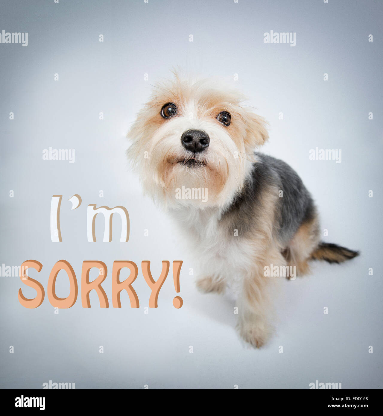 I'm sorry, lovely dog beg pardon and look - Stock Image