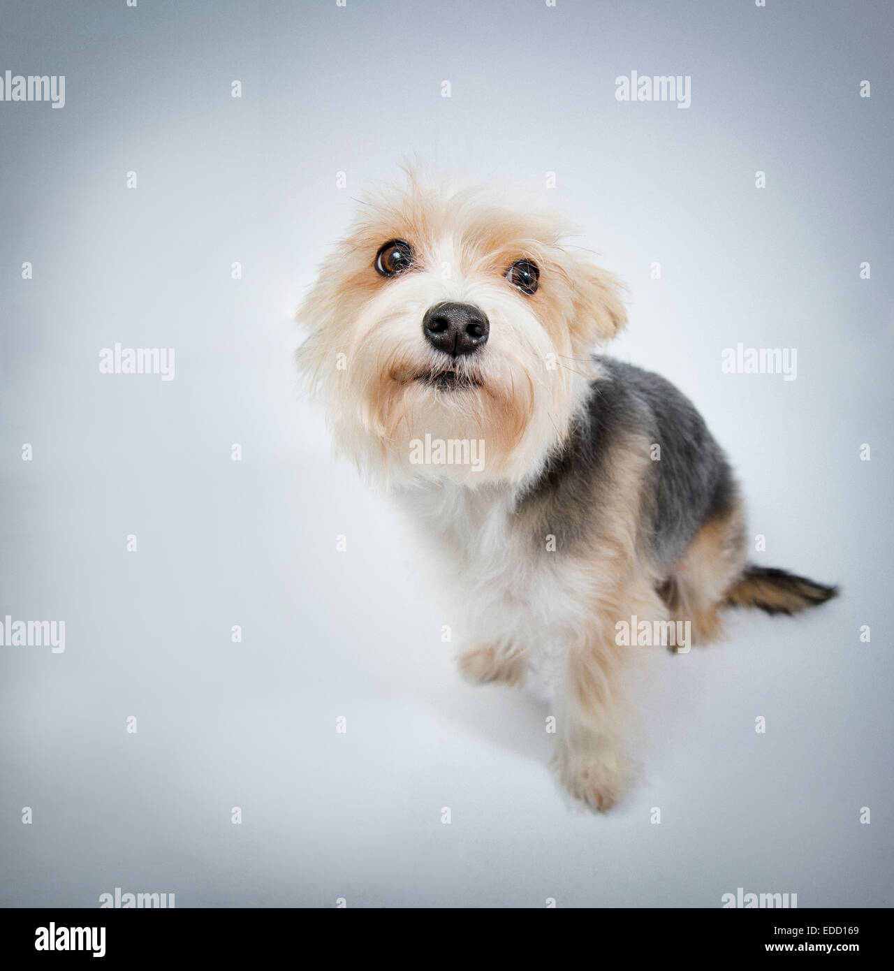 I'm sorry, lovely dog beg pardon top view - Stock Image