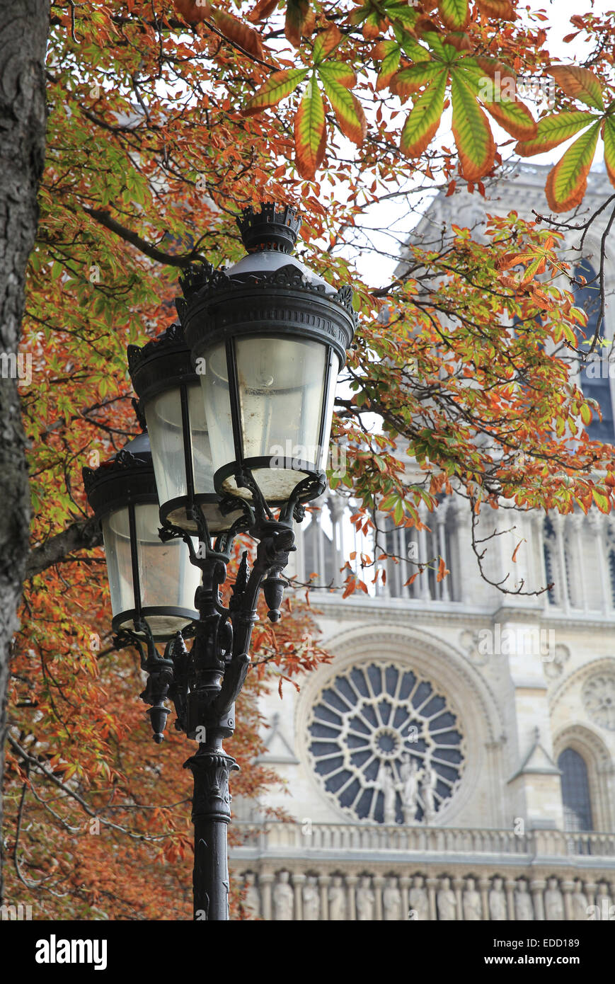 The front of Notre Dame Cathedral, in Autumn or Fall, in Paris, France - Stock Image