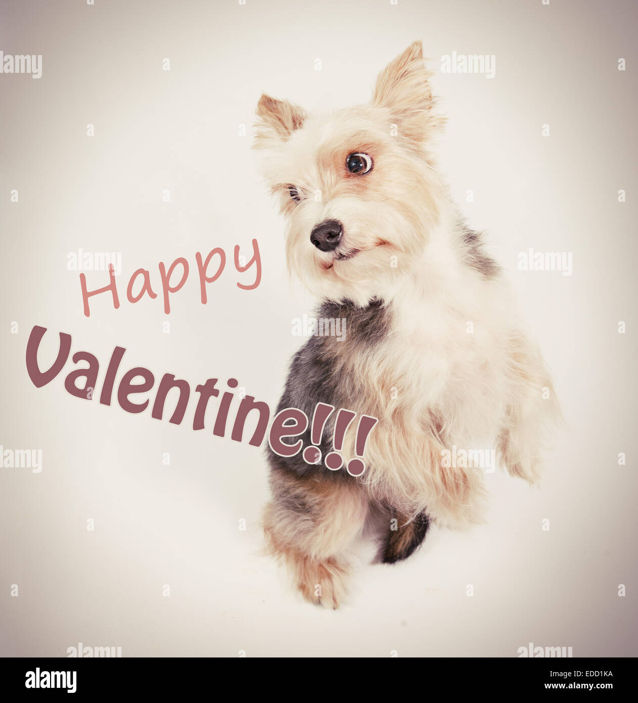 Happy st valentine dog love postcard - Stock Image