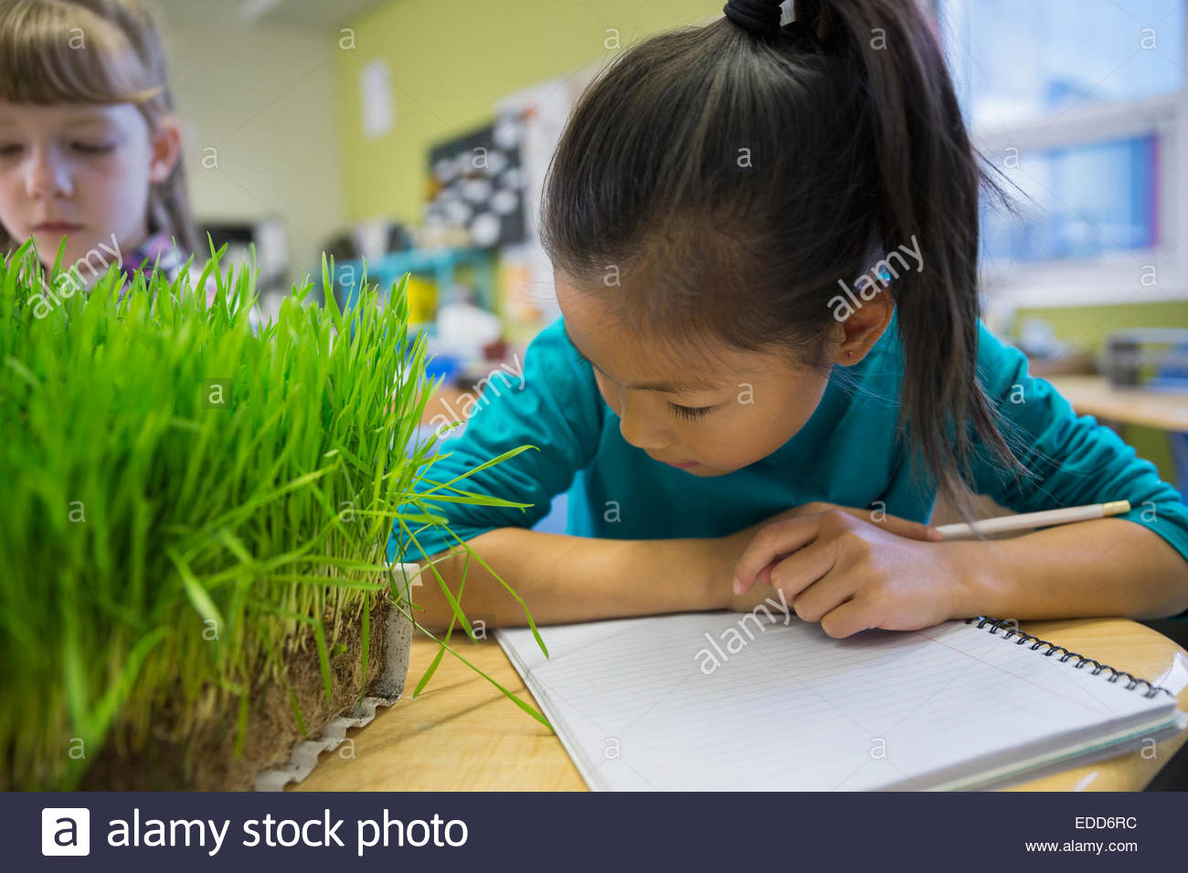 Elementary students examining sprouts in laboratory - Stock Image