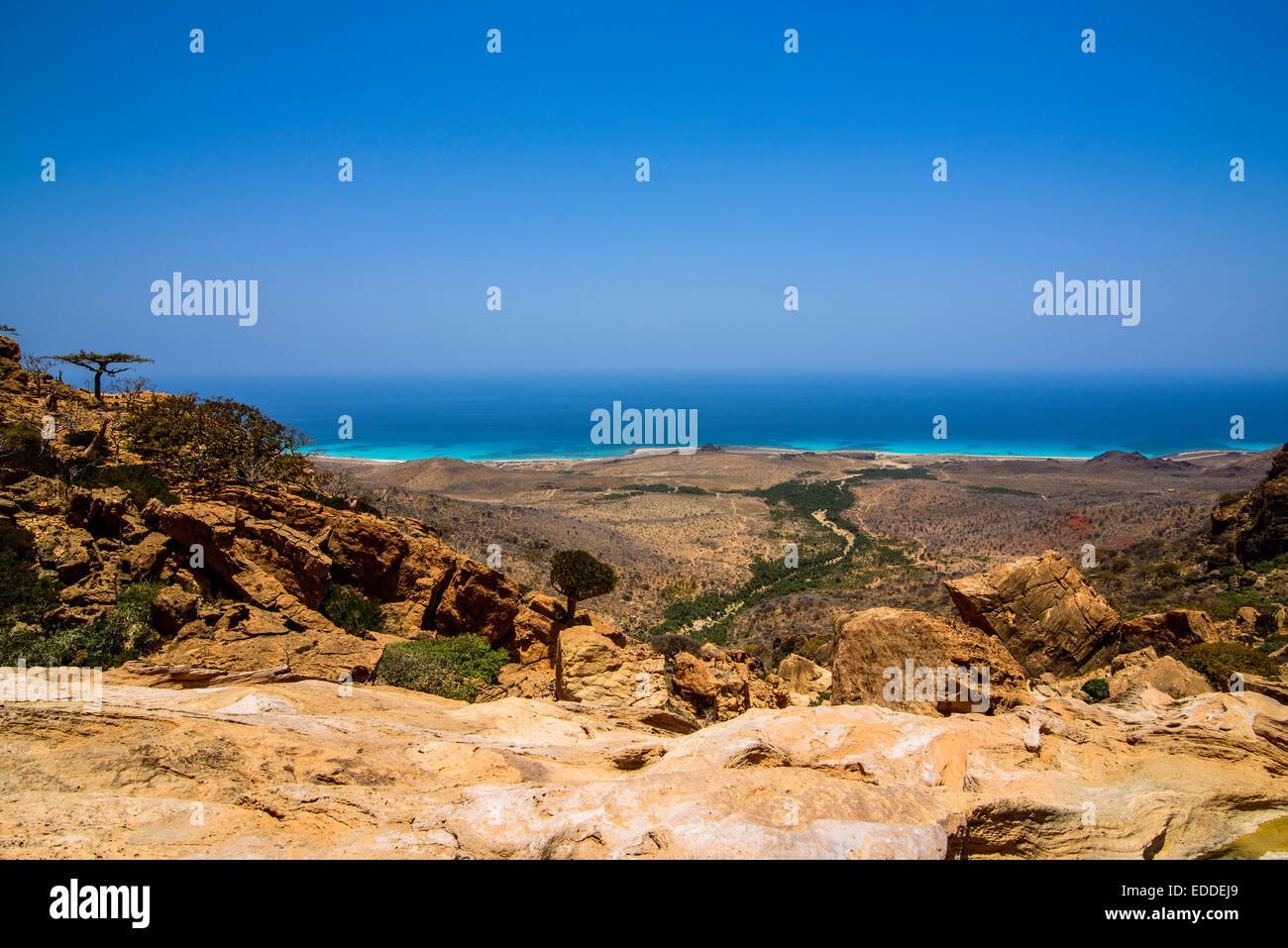 Coast, Homhil protected area, island of Socotra, Yemen - Stock Image