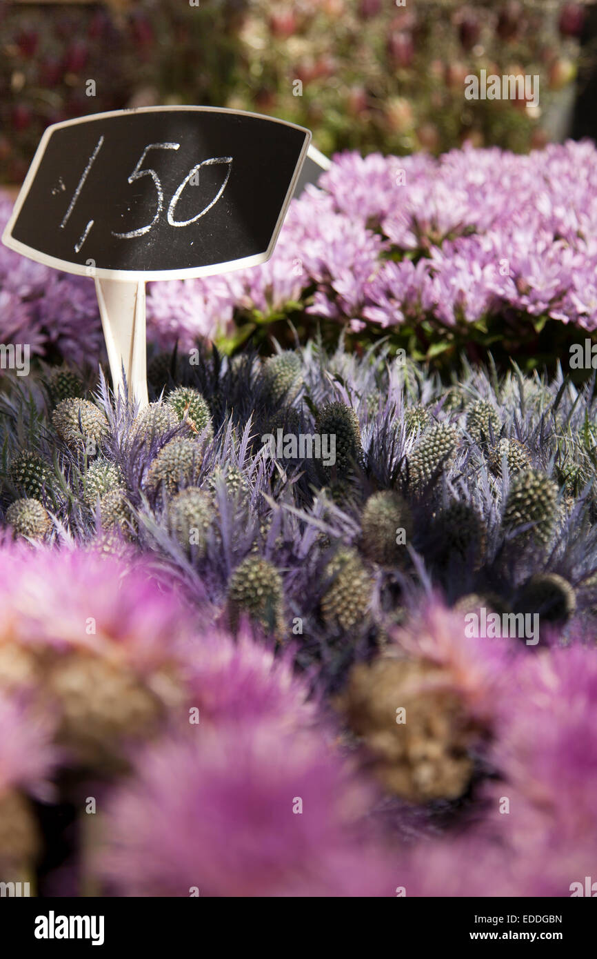 Netherlands, Amsterdam, cut flowers at market - Stock Image