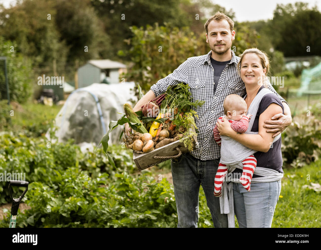 Young family standing in their allotment, smiling. Man holding a box full of freshly picked vegetables. - Stock Image
