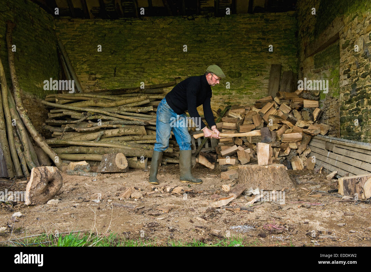 A man chopping wood with an axe, a pile of logs and chopped wood. - Stock Image