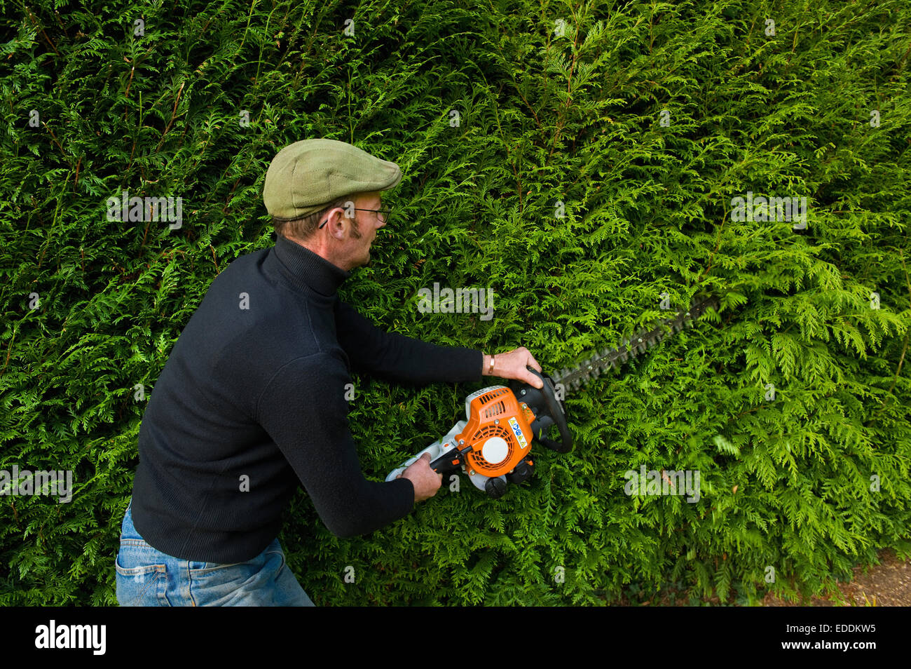 A man trimming a thick green hedge with a motorized hedge trimmer. Stock Photo