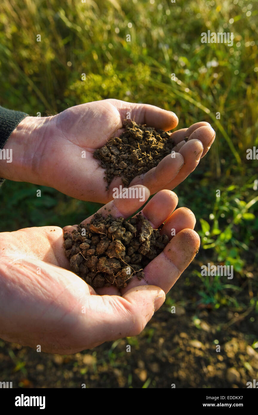 Close up of a man's hands holding soil samples. - Stock Image