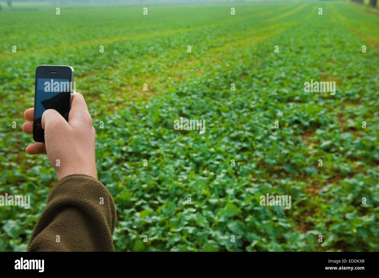 Hand holding a mobile phone, taking a picture of a field. - Stock Image