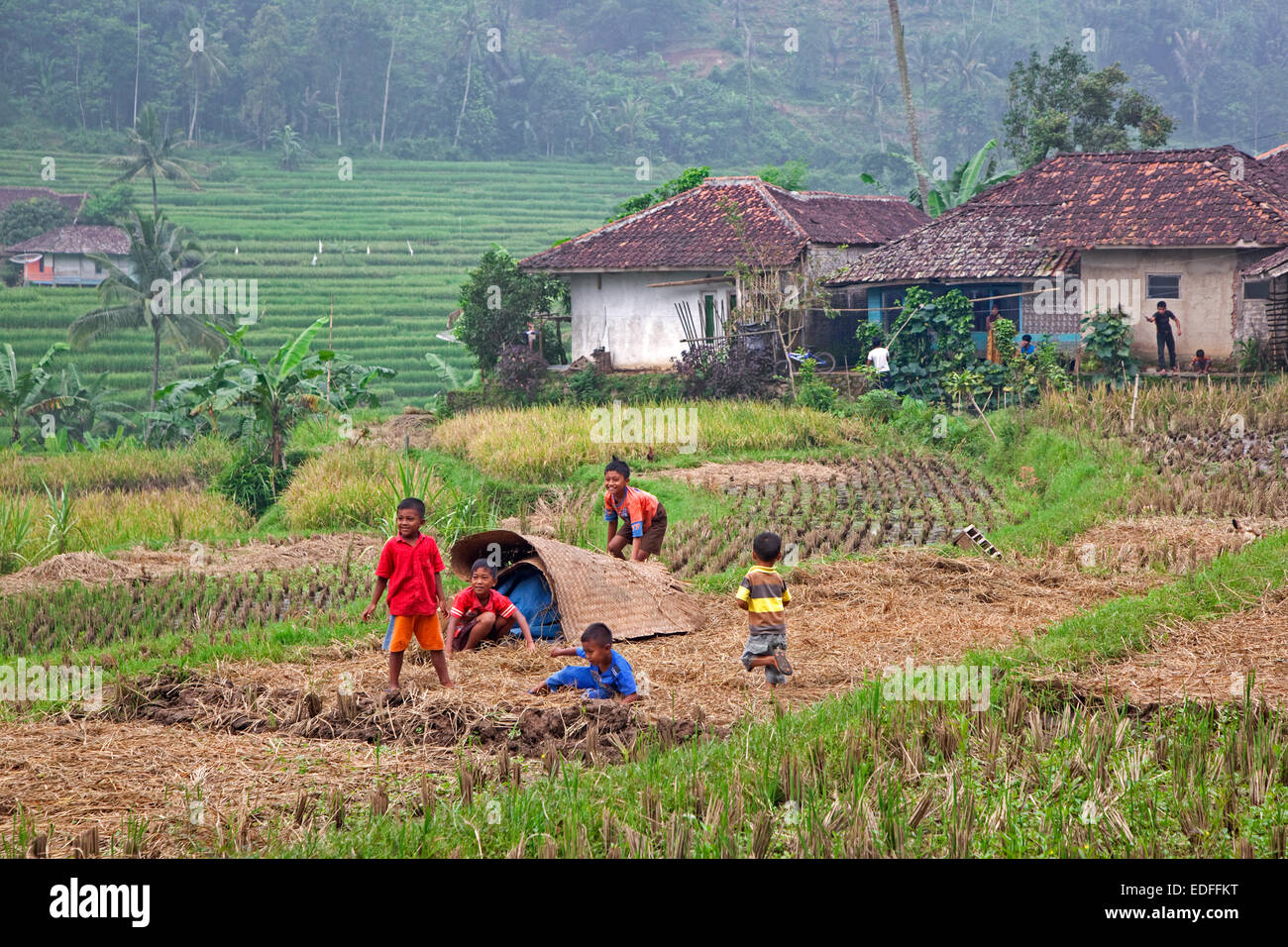 Rural village and Indonesian children playing in rice field, Cianjur Regency, West Java, Indonesia - Stock Image