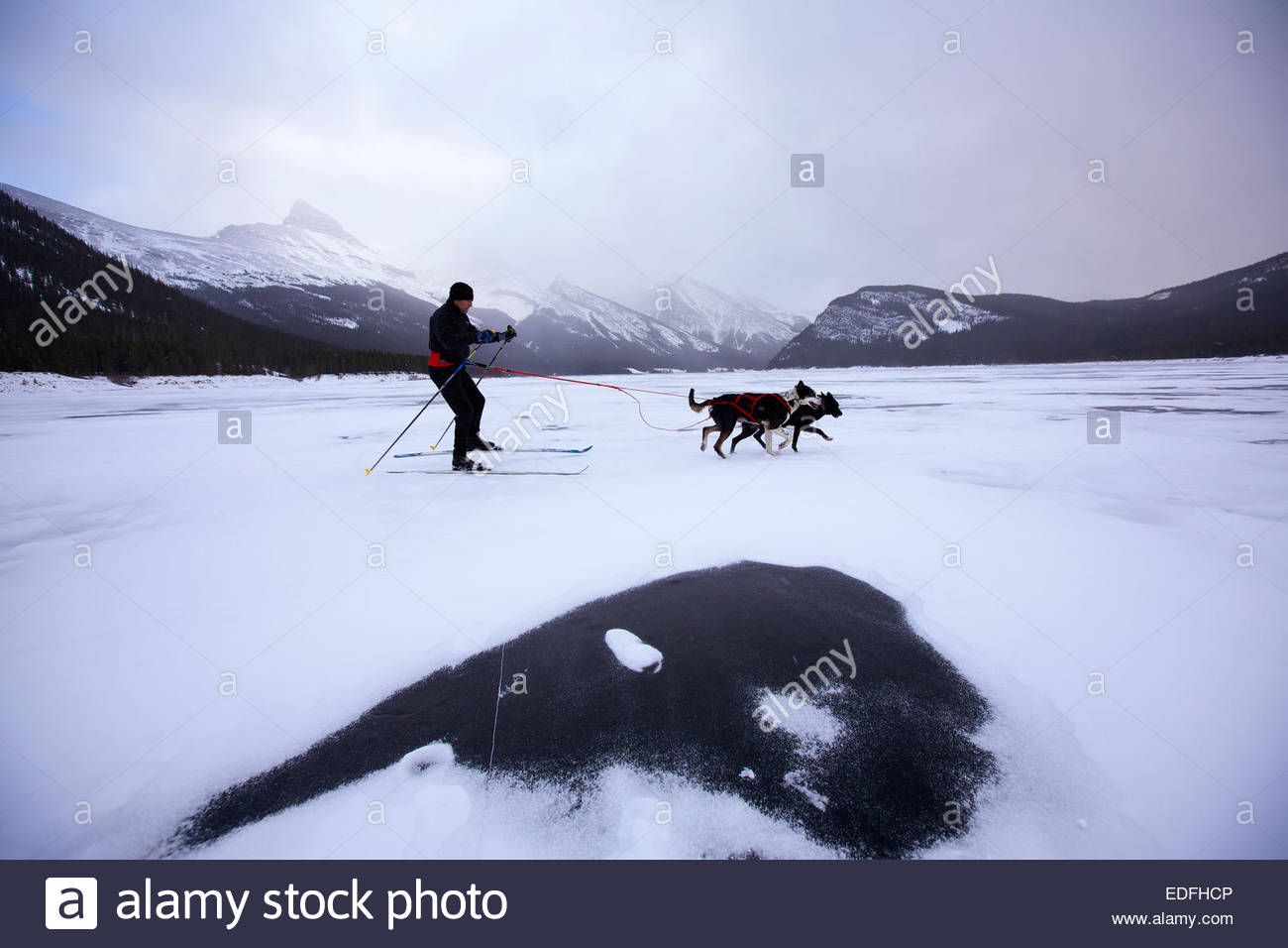 Skijoring, a winter sport where a person on skis is pulled by a dog across a frozen lake. - Stock Image