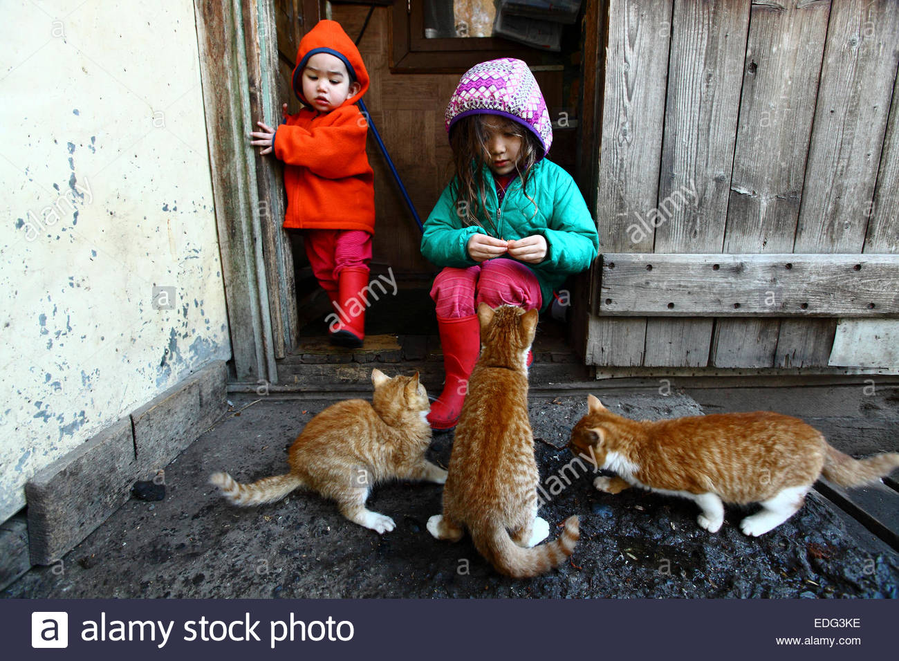 Two young children feed craps to three kittens in Puerto Prat, a village located on the Eberhard fjord in Chile. - Stock Image